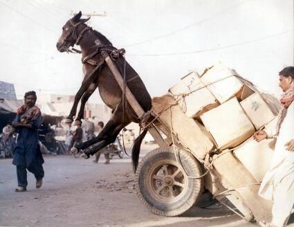 donkey-in-air